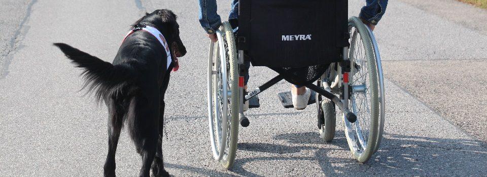 Schwarze Labrador Hündin Peppa begleitet eine Rollstuhlfahrerin auf einer asphaltierten Landstraße