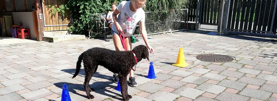 Schwarzer Pudel Miaquori beim Training in der Reha-Hundeschule